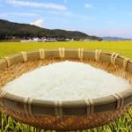 無農薬米について
