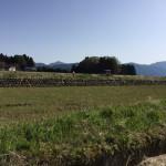 大野市の無農薬米の生産量の田んぼへ