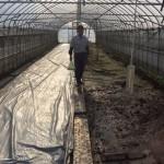 無農薬米ミルキークイーンの育苗の準備