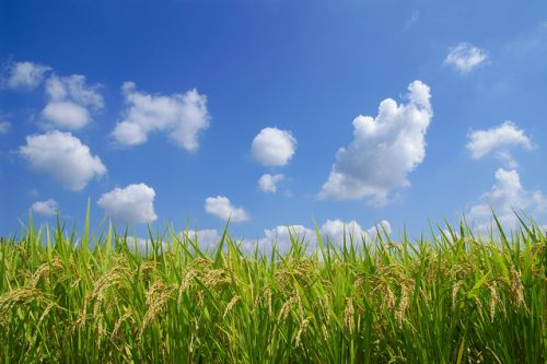 無農薬栽培の勉強会