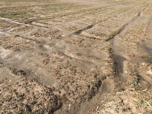 無農薬米の田んぼ3月13日