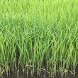 5月18日 無農薬・無化学肥料栽培いのちの壱の育苗