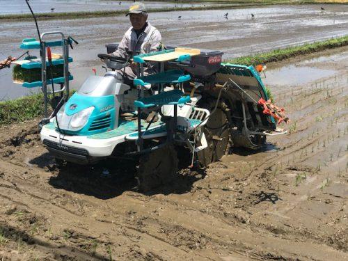 無農薬・無化学肥料栽培 コシヒカリ 匠 の田植えを行いました♪