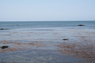 かささぎさんの前の海