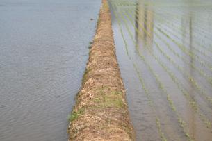 左の田植えしてない方が当店の生産者さんの田んぼです。