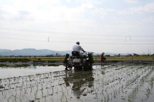 三村さんの田植え風景