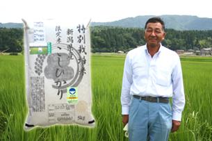 特別栽培米減農薬新潟県産こしひかり
